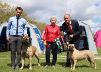 CAC/CACIB Show i Roskilde, CRUFTS kval. (Dommer: Anna Kochan, Polen)
